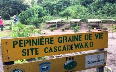 Pepiniere site Cascada WAKO