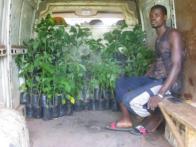 Reboisement au Togo – Distribution des 340.000 jeunes plants