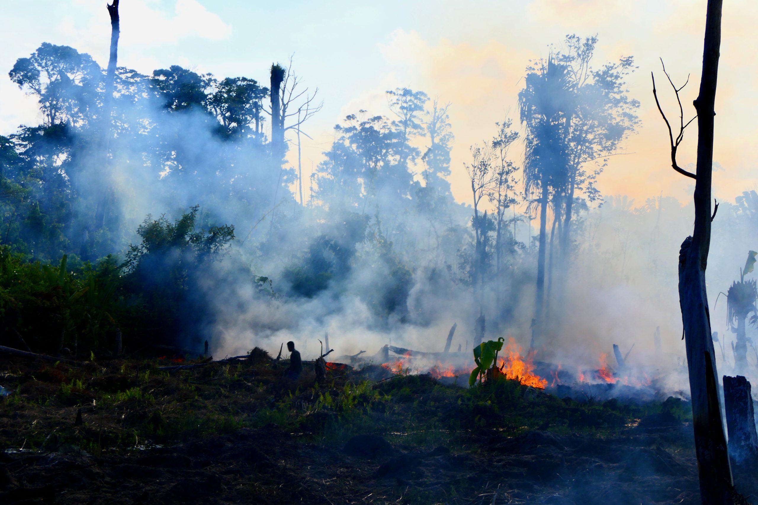 déforestation Madagascar