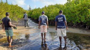 Conservation Mangrove