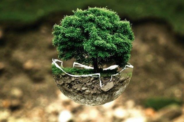 Eco Partner boom