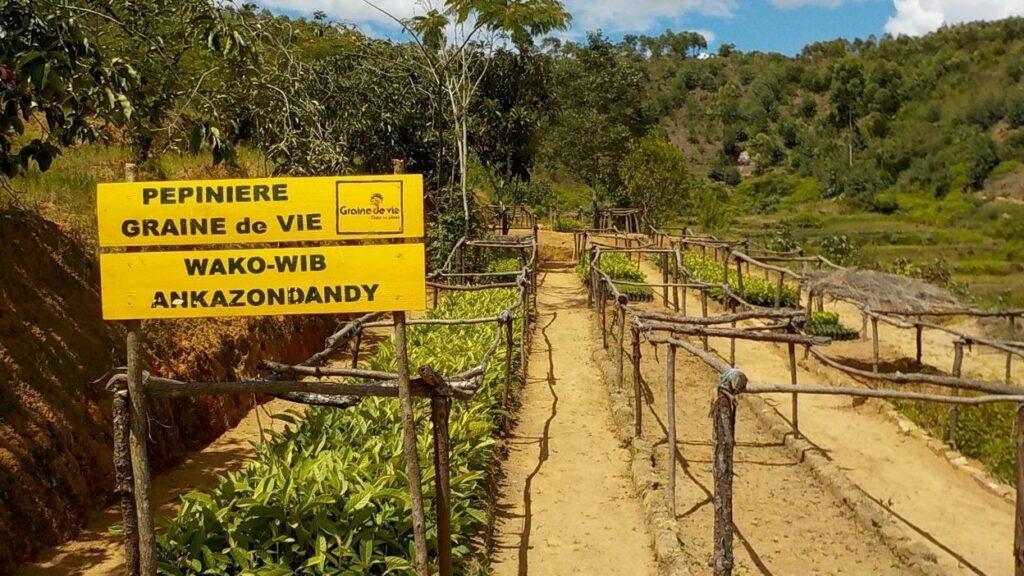 Ankazondandy-Pépinières-arbres-de-rente