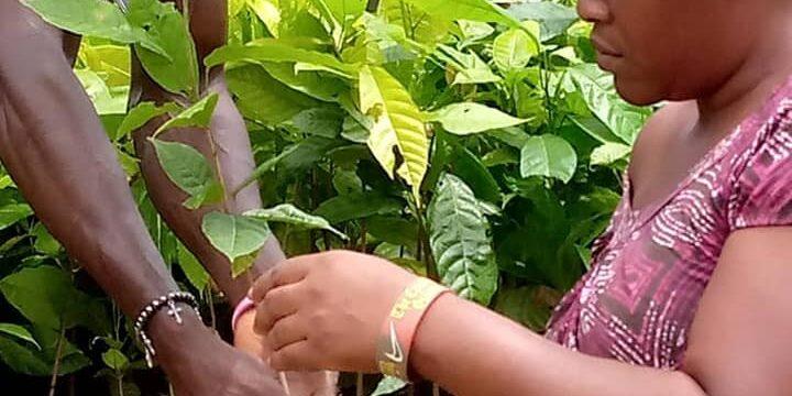 Journée de l'arbre Togo